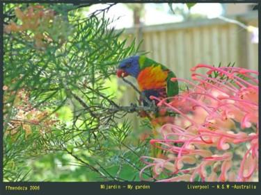 Fotografias mi jardin series
